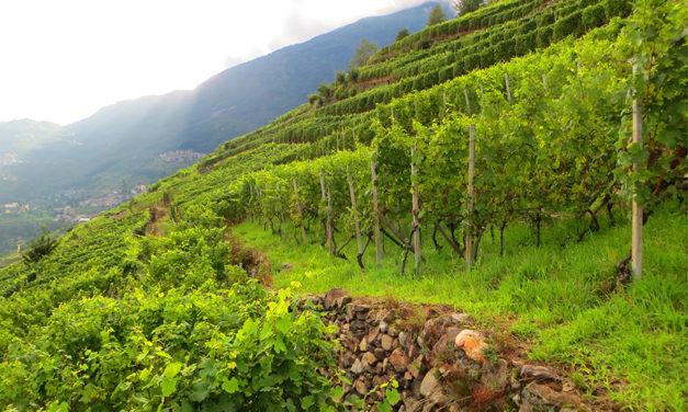 Valtellina: le multiformi alchimie di un territorio