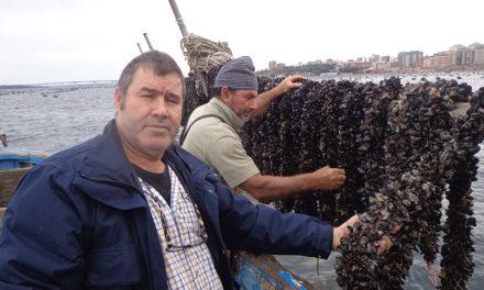 Taranto, dove la cozza nasce dall'ulivo
