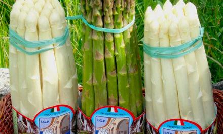 Italia: il giardino infinito degli asparagi